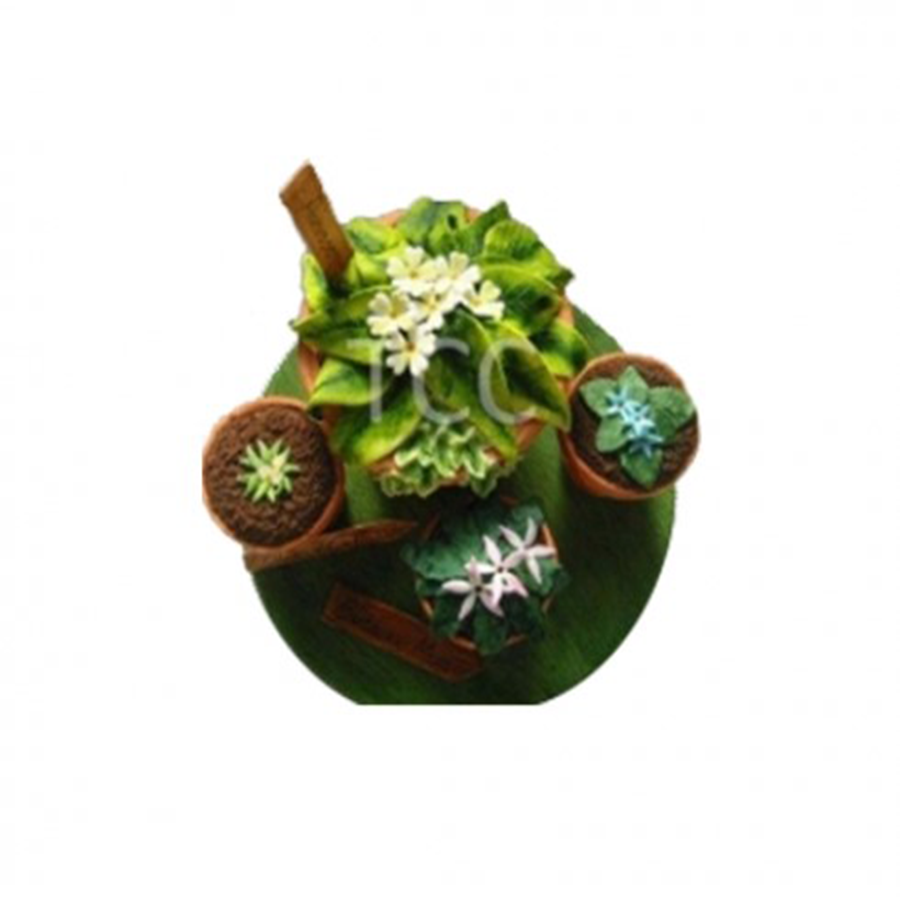 Botanical Interest